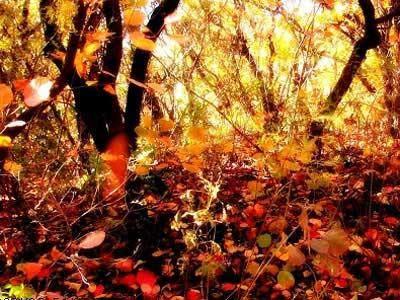 香山红叶风景画